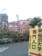 西早稲田交差点のタチアオイ