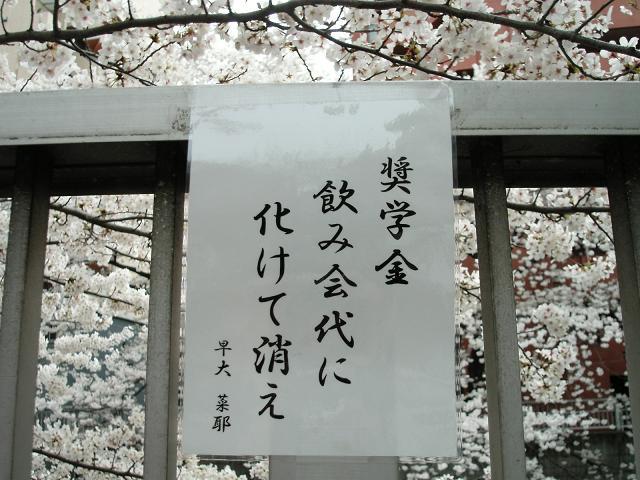 早稲田ならではの早稲田川柳も花見の楽しみです