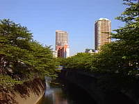 新緑あふれる神田川