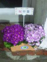 早大西門通りに飾られた祝卒業の鉢植え