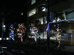 早稲田大学22号館前に輝く4本の木