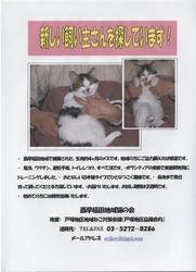 かわいい猫ちゃんの里親さん募集